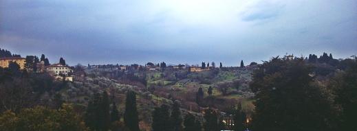 gaje oliwne na jednym ze wzgórz