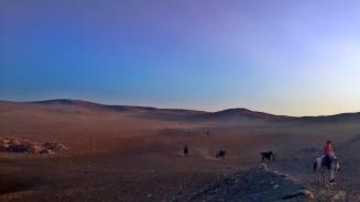 Sahara na granicy miasta