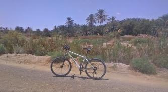 rowerkiem po oazie