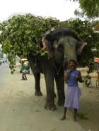 słoń i jego pan