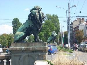 lwy Sofii
