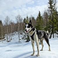 Workaway/Husky/Norwegia #2 – Dwa tygodnie na workaway