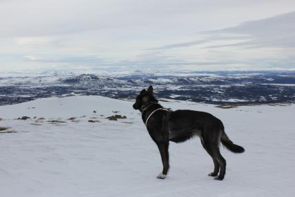 z Freją w górach Synnfjell