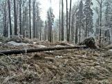 magiczny las karpacki, droga na Babią Górę