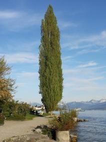 nad jeziorem, w drodze z Zurychu do Rappersville