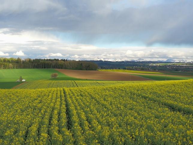 pola kantonu Vaud