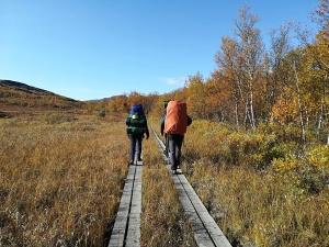 """drewniany """"broadwalk"""" ułatwia wędrowanie w podmokłym terenie"""