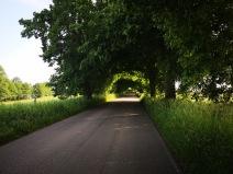 tunel drogowy z drzew
